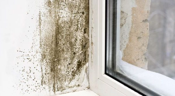Is your property damp and prone to mould?